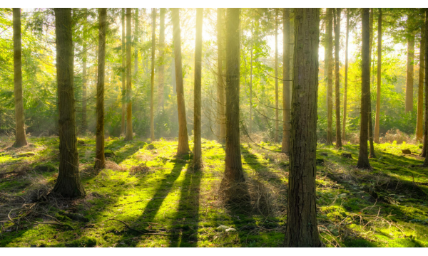 Forest Bathing and why its so good for you!